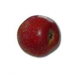 Calville rouge