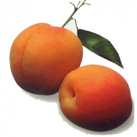 abricot luizet