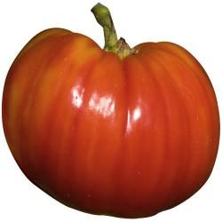 Tomate Supersteak