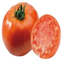 Tomate Dona