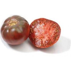 Tomate noire greffée