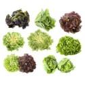 Mix salade 24  plants de saison
