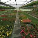 Jardinières Suspensions